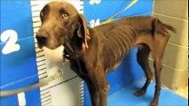 Ils trouvent ce pauvre chien abandonné dans la rue, mais ce qu'il y a dans son ventre Je n'arrive pas à le croire!