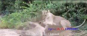 Wild Extreme Animal Attacks (Wild Documentary) - video dailymotion