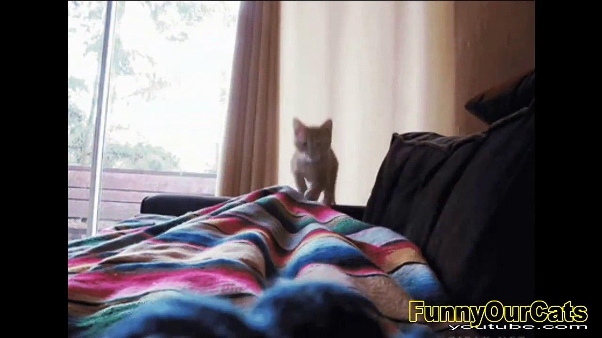 Cute Funny Cats Videos & Music & COMEDY & CUTE