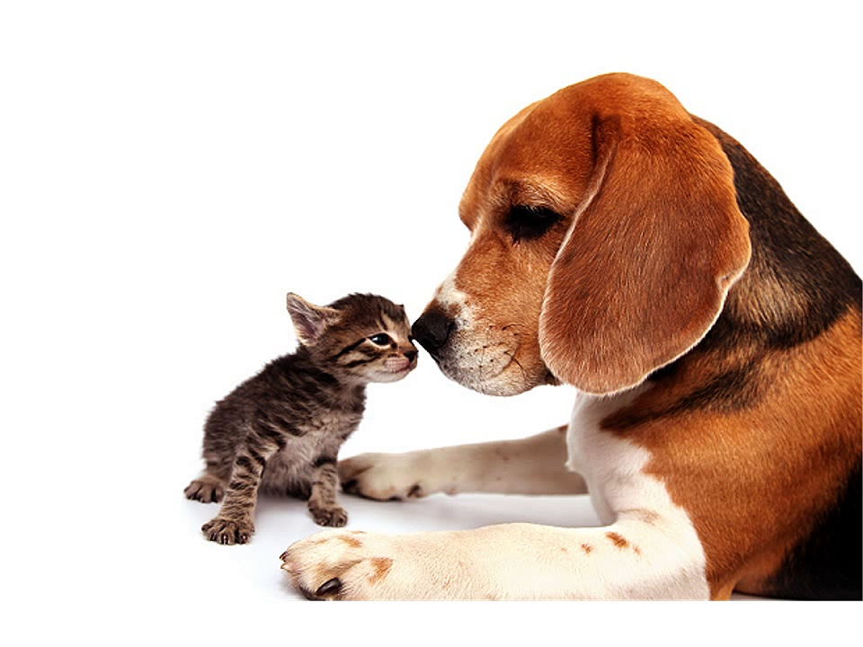 Pet Insurance Reviews, Reviews on Cat and Dog ASDA Pet Insurance