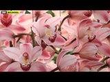 Doğanın Renkleri - Orkide Fragman - TRT Belgesel