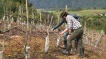 Du vin en Patagonie, conséquence du réchauffement climatique
