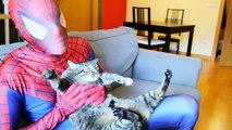 Spidergirl vs Joker Loses His Mask w/ Spiderman Ninja Turtles Venom Frozen Elsa & Funny Superhero