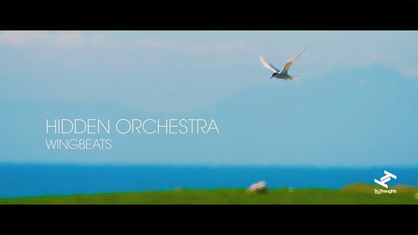 Hidden Orchestra - Wingbeats (Official Video)