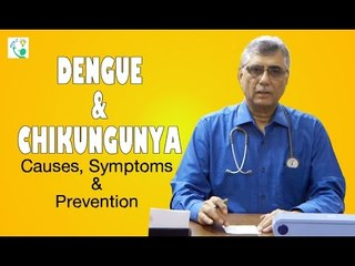 Dengue & Chikungunya Causes, Symptoms & Prevention | Treatment Of Dengue & Chikungunya