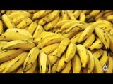 Superfoods To Gain Weight Fast | Health Tips Education