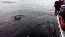 Observation de 5 baleines à bec