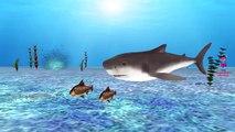 Finger Family Rhymes Sharks Cartoons for Children | Shark Finger Family Children Nursery Rhymes 3D