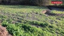 Baie de Douarnenez. La lutte contre les algues vertes commence dans les ruisseaux