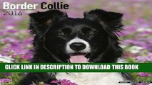 Best Seller Border Collie Calendar - Only Dog Breed Border Collies Calendar - 2016 Wall calendars