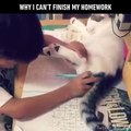 Cet enfant tente de faire ses devoirs, mais regardez bien ce que le chat est en train de faire... Ohhh, quel petit ANGE !