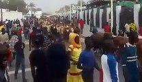 Magal, Regardez l'arrivée des bœufs de Cheikh Boeuf