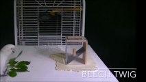 Ce perroquet super intelligent se fabrique un outil pour attraper une graine !