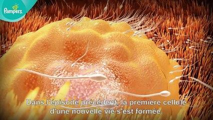 Pampers® - Votre grossesse #2 – Le coup de foudre (semaines 1 à 9)