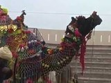 Hours Dance in Punjab Mela Mujtsar