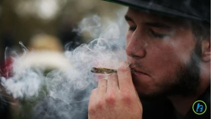 Cannabis Affects on Memory Loss