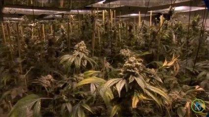 Pennsylvania Legalize Medical Marijuana