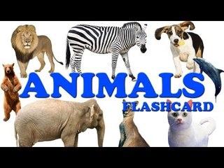 Animals Flashcard
