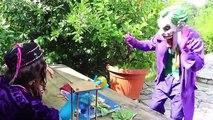 Hulk & Spiderman Becomes SpiderHulk?! w/ Hulk-Spider, Joker, Lady Hulk, Frozen Elsa & Candy :)