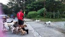 Ce promeneur de chiens tombe sur une mauvaise surprise en promenant des chiens !