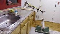 Mükemmel Bir Hindi Pişirmek İçin Sevimli Bir Köpeğe ve Baltaya İhtiyacınız Var!