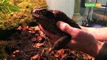 Les amphibiens envahissent le musée