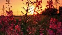 Le coucher du soleil à travers des fleurs / The sunset through some flowers