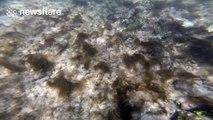 Snorkeler spots dangerous baby sea snake underwater
