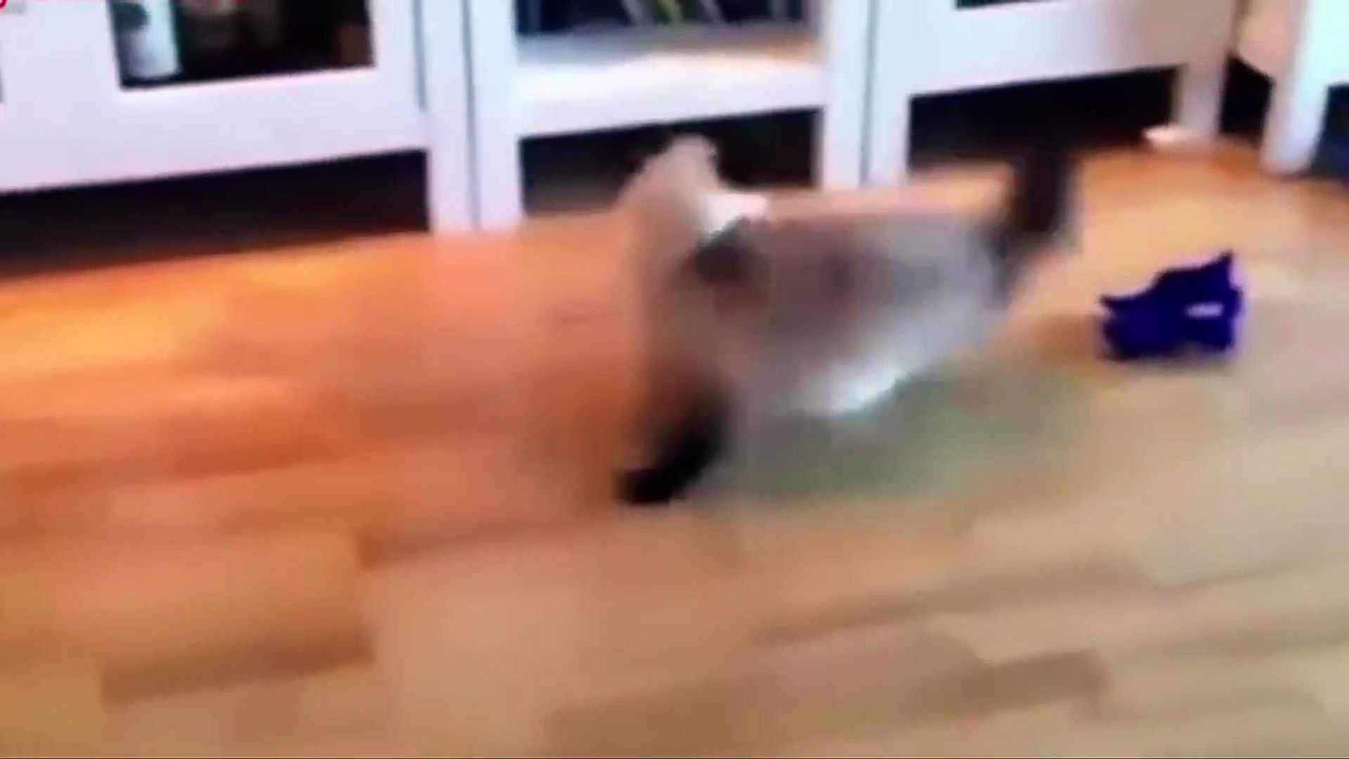 Funny Pets Video Compilation | Angry pets | comedy pets ever - Funny cat compilation