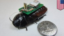 Researchers develop cyborg cockroaches as mapping tool in disaster areas