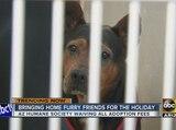 Free animal adoptions during holiday shopping season