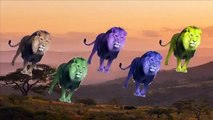 Finger Family Wild Lion Of Africa Daddy Finger Animation Nursery Rhyme Song For Kids & Toddlers