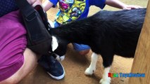 ANIMALS POOPING AT THE ZOO Kid at the ZOO Funny Family Fun Trip to Petting Farm Animals for Children-10j0shndmfk