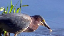 Be Amazed By This Hunter ! Nature Minnesota Travel Minnesota Parks and Lakes !