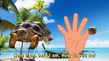 Finger Family Finger Family Turtle Family Nursery Rhyme Animal Finger Family Sea Finger Family f