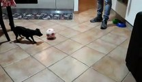 Il Piccolo Teo gioca a Calcio con il suo Papà