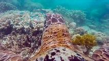 Deniz Kaplumbağasının Gözünden Harika Su Altı Görüntüleri