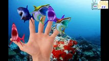 Finger Family Songs Colors Whale Shark | Sea Animals Colors Dolphin Finger Family Nursery Rhymes