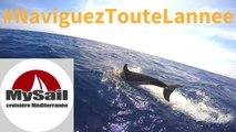 My Sail croisière Méditerranée - navigation voilier - Porquerolles dauphins