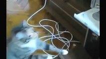 KOMİK VİDEOLAR Komik Kediler FailWin Derleme Komik Kediler Komik Hayvanlar En Sevimli Kedi