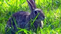 FOR KIDS: FARM ANIMALS & WILD ANIMALS - Cute Baby, Birds, Animals,