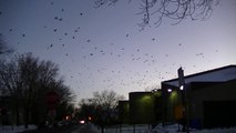 Is Climate Change Causing Phenomena Millions Of Crows TAKING OVER CITIES FREEZING COLD TEMPS