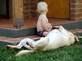Bebe Y Su Perro Labrador ★ bebes divertidos - risa bebe - bebe humor - bebes chistosos