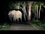 Elephants fighting in Wayanad Kerala Forest India __ Wild Elephants fighting in Kerala Border