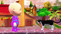 Little Baby Boy Funny Dogs Vs Cats Finger Family Songs | Pussy Cat Pussy Cat Children Nursery Rhymes