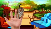 Animals Finger Family| Zoo Animals vs Jungle Animals vs Dinosaurs| Nursery Rhymes| Songs for Kids
