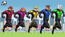 #Paw Patrol #Antman #Super Heroes #Finger Family Songs #Nursery Rhymes Lyric & More Panda Kids