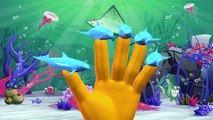 Dolphin Finger Family Rhymes And Shark Twinkle Twinkle Little Star | Sea Animals Nursery Rhymes