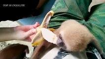 Top 10 des bébés ANIMAUX les plus MIGNONS au MONDE ! Super-MIGNONS et tellement ADORABLES !
