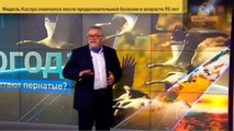 Свежий перл от Украины- Маразм зашкаливает- Российские птицы объедают Украину